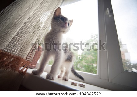 the cat is lying on the windowsill next to wedding rings - stock photo