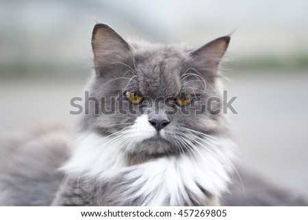 The cat is on the table In the background blurred colorful cute cats close up funny playful young cat , domestic cat cat cat relaxing Cats play at home relaxing , elegant cat 9 - stock photo
