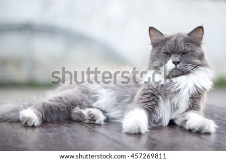 The cat is on the table In the background blurred colorful cute cats close up funny playful young cat , domestic cat cat cat relaxing Cats play at home relaxing , elegant cat 2 - stock photo