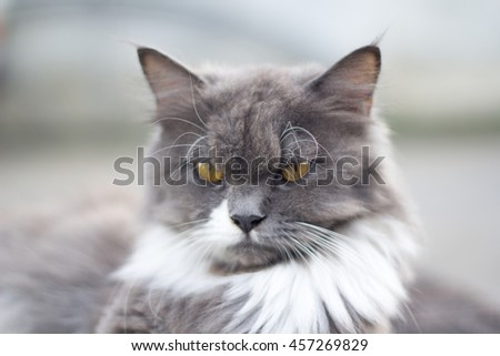 The cat is on the table In the background blurred colorful cute cats close up funny playful young cat , domestic cat cat cat relaxing Cats play at home relaxing , elegant cat 4 - stock photo