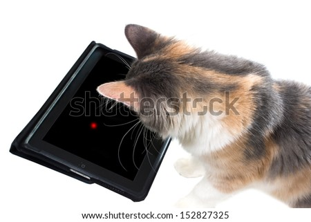 The cat is playing a game on the tablet - stock photo