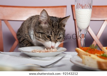 The cat is sitting at the table and eats with plates - stock photo