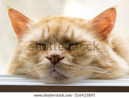 The cat lay down on the window sill, closed his eyes in sweet bliss, and proceeded to his main work sleep. - stock photo