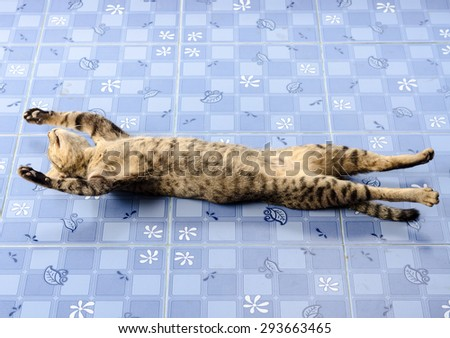 The cat lying stretched full length on the floor,Sleeping posture of cat - stock photo