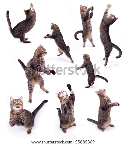 The cat on two legs on the white isolated background - stock photo