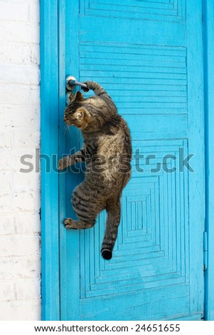 The cat opens a door - stock photo