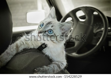 The cat sits in the car on a seat - stock photo
