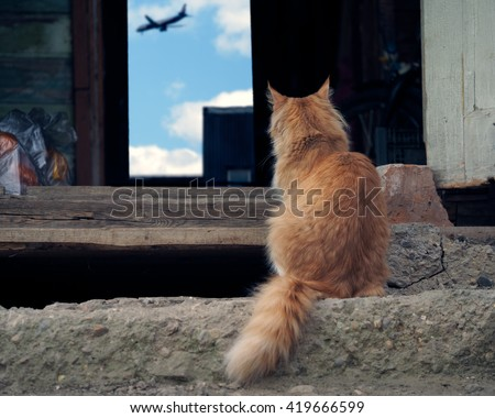 The cat sits on the porch of an old farmhouse and is looking at the airplane. Cat red, fluffy. Conceptually - cat dreams farewell to host a meeting, waiting. Abandoned animals. Travel with animals - stock photo