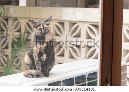 The cat stared at me - stock photo