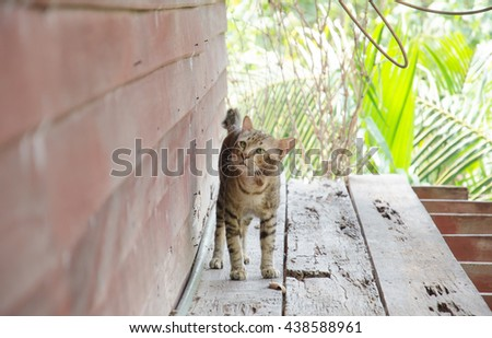 The cat walk on old wood. near red wood wall. - stock photo