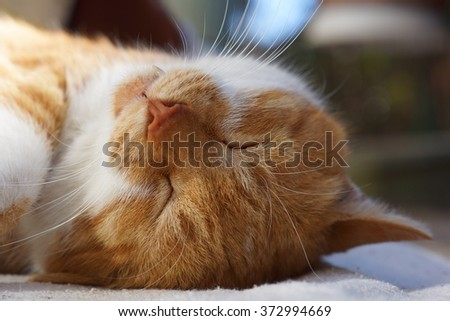 The cat which sleeps