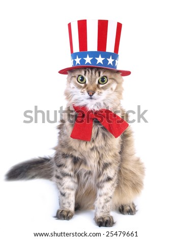 The cat with a patriotic hat - stock photo
