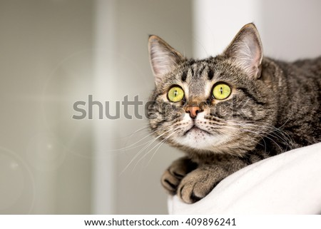 The cat with bright green eyes attentively also stares up - stock photo