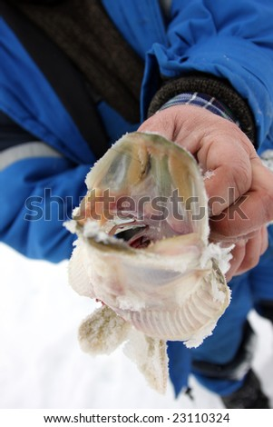 The catch. Pike caught fishing for the winter. - stock photo