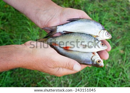 The caught catch of fish in hands at the fisherman - stock photo