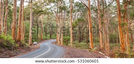 The Caves Road winds through the Boranup Karee Forest near the town of Margaret River, Western Australia.