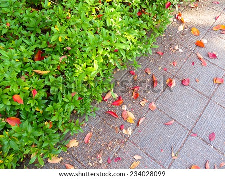 the changing colors of fall foliage in Japan (vivid autumn foliage) - stock photo