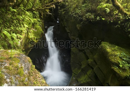 The Chasm, Fjordland Nationalpark, torrent rushing down a deep gorge amidst lush temperate rainforest, Southland, New Zealand