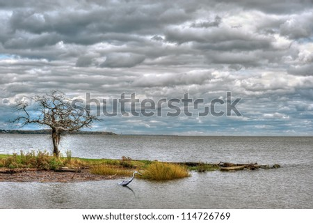The Chesapeake Bay in Maryland on a cloudy day with a Great Blue heron fishing - stock photo