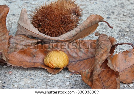 The chestnuts and dried leaf, autumn composition - stock photo