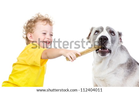 The child feeds a big dog. isolated on white background