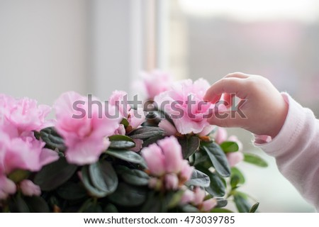 The child touches of pink flowers
