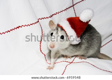 the christmas mouse - stock photo