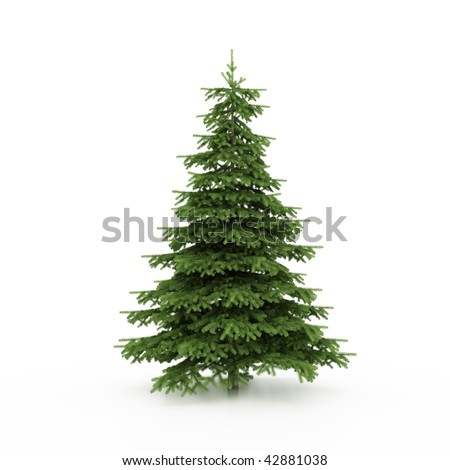 The Christmas tree ready to decorate - stock photo