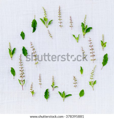 The circle of fresh holy basil flower and holy basil leaves from the garden on white fabric background. - stock photo
