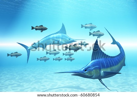 THE CIRCLE - Two blue marlins circle a school of fish in ocean waters. - stock photo