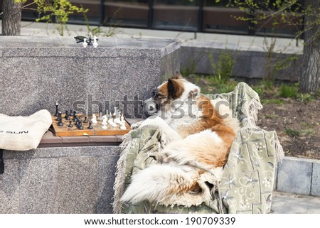 The clever dog plays chess on the street - stock photo