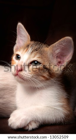 the close up of little kitten with tiring and sleepy expression - stock photo