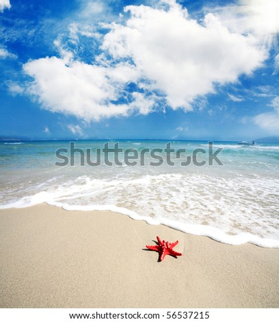 the closeup if a Red starfish lying on the beach - stock photo