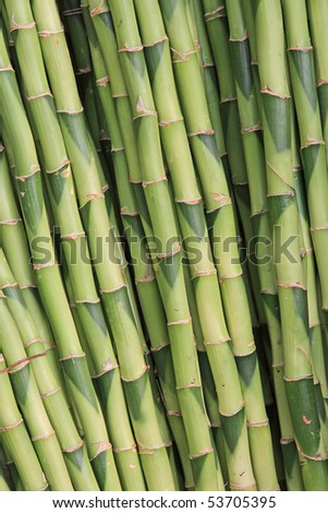 The closeup of bamboo texture - stock photo