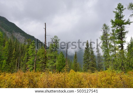 The clouds thickened over the forest of the Altai in August. Valley of Savla river