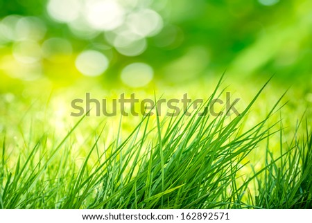 The Clump of Green Grass in the Meadow