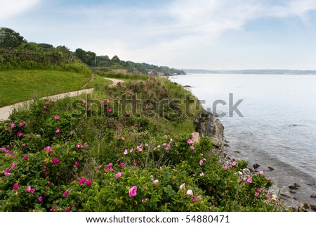 The coast of Newport Rhode Island near the historic 40 steps on the cliff walk.  Rugosa roses are scattered across the shore line. - stock photo