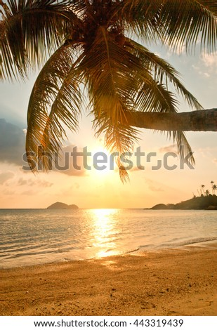 The coast of the tropical sea at sunset, palm tree, white sand and sun in water - stock photo