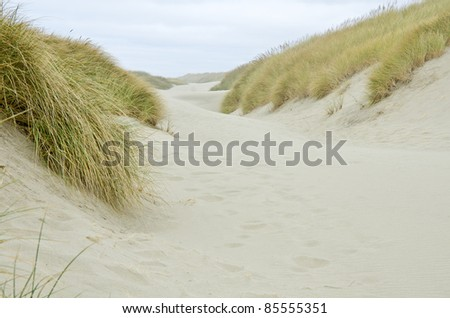The Coastal Sand Dunes of Oregon - stock photo