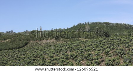 The Coffee Belt, also called Coffee Triangle is a topographic region of Colombia, within its extension by the departments of Caldas, Risaralda, Quindio, Valle del Cauca, Antioquia and Tolima. - stock photo