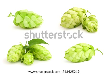 The collage fresh green hop isolated on white background. - stock photo