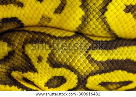 The color of the snake skin - stock photo