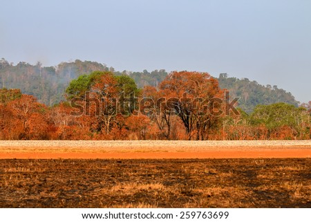 The color of the tree is a wood fire in the afternoon. The distant and indistinct - stock photo
