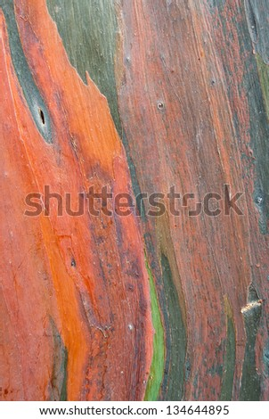 The colorful abstract pattern of eucalyptus tree bark. - stock photo
