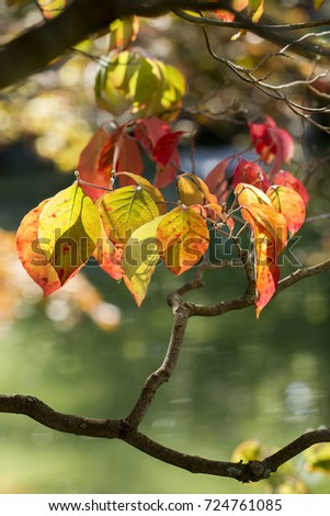The colorful autumn leaves at Manito Park in Spokane, Washington.