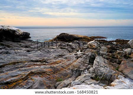 The colorful craggy rock ledges of the coast of Maine with the Atlantic Ocean in the distance.