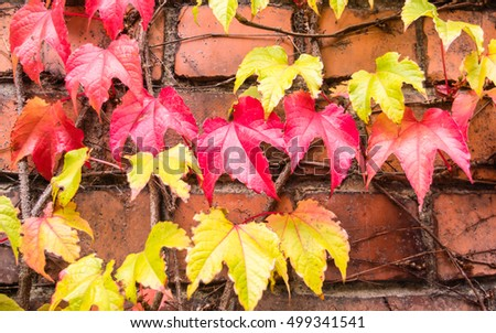 The colorful leafs in autumn