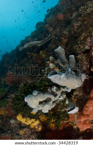 The colorful reef of coral and sponges making a wall in the ocean in the South China Sea - stock photo