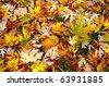 The colourful Autumn Background - stock photo