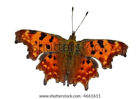 The comma isolated on white - stock photo